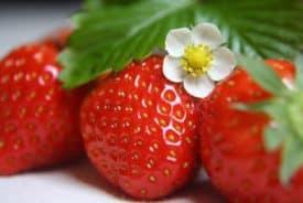 Des Juni's Erdbeermund