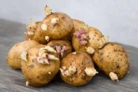 Sind gekeimte Kartoffeln giftig?